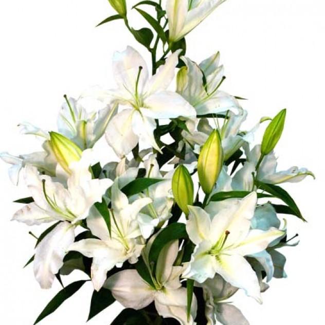 Букет из белых лилий