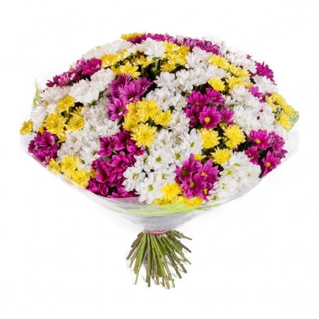 """Букет из 35 хризантем """"3 цвета счастья"""""""